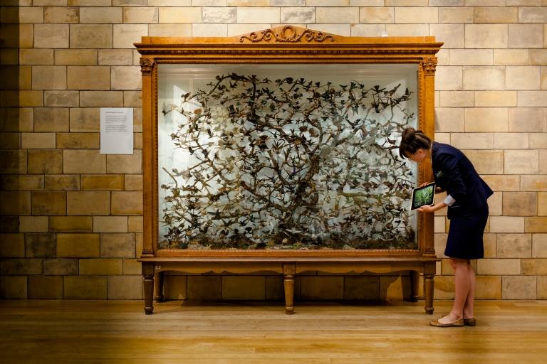 hummingbird showcase